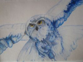 HEDWIG ! by msartfreak101