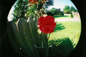 fisheye rose by princesssleah
