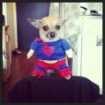Superdog by gInabr0wn