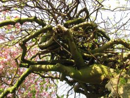curly tree by zulou