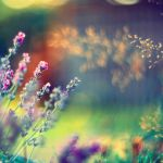 summer ... by BaxiaArt