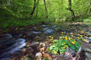 Green stream by d-minutiv