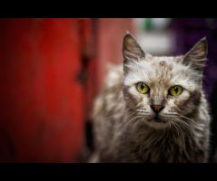 Urban Cats - 80 by MARX77