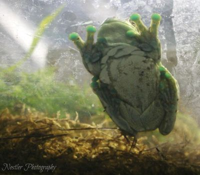 Belly of the Frog by AuthorKatla