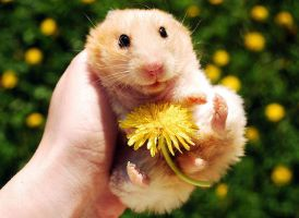 flower hamster by evilangel100