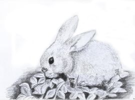 Little Bunny by Andrew-AR