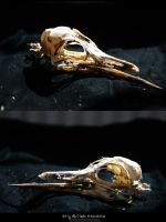 Bird Skulls Stock 4 by emothic-stock