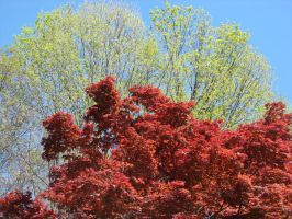 .Green and Red. by avondaleklr