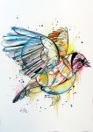 European Goldfinch by fiona-clarkeART