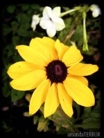 Mellow Yellow by amandaWAY