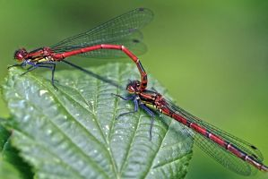 Damsels in... by organicvision