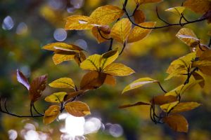 Autumn leaves Herbstblaetter2 by archaeopteryx-stocks