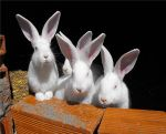 Rabbits by Fayerin