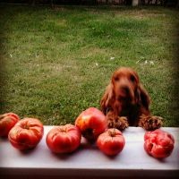 Panco feat. Tomatoes by MishUMuch