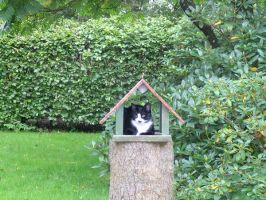The cat in the birdhouse by Miss-Chili