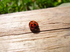 Lady Bug by Alysiah