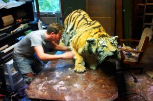 Tiger in progress! by Meddling-With-Nature