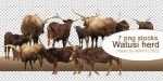PNG STOCK SET: Watusi herd by MAKY-OREL