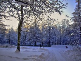 about winter sun 7 by liquid--skies
