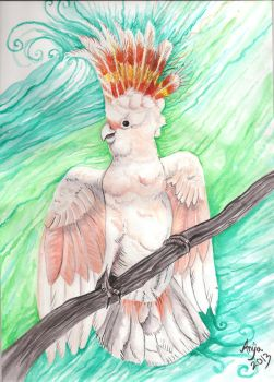 His Feathers Show the Sun by Maelthra