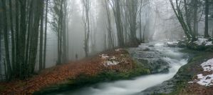 The Two Paths by borda