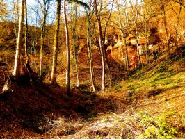 Adventure Forest by Yaehara