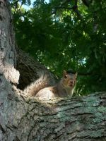 dont touch that squirrels nuts by renachristsuperstar
