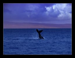 Maui Whale by NewEraPhotography