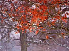 Autumn Colours in Winter by DundeePhotographics