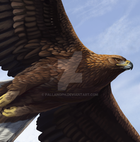 Golden Eagle: Detail by pallanoph
