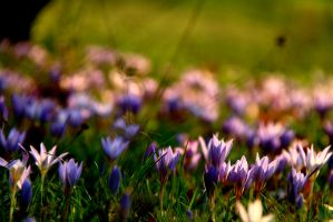 Purple flowers 5 by LENA3689