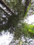 Tree Canopy by Scubab8