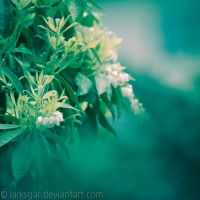 Spring bells by larksgar