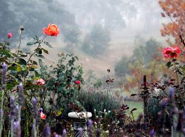 Misty Morning Garden III ... Orange Rose by xjames7