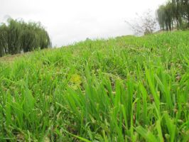 lots of grass by deniedfromfreedom
