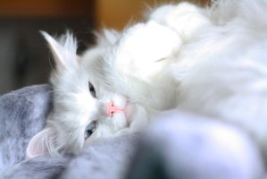 Lazy kitten by Velara