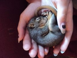 baby squirrel by twilightwolf333