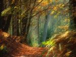 Light in Forest by allwell