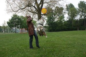dog frisbee by lindaatje
