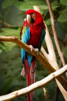 Macaw Colors by StevenDavisPhoto