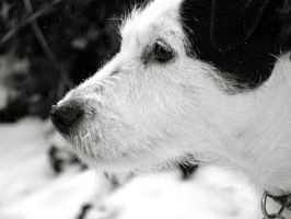 Maisy in the Snow #2 by LittleRedx41