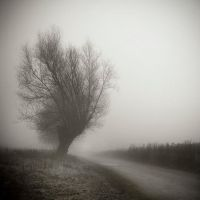 in the fog by BelcyrPiotr