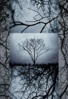 trees by lafaette