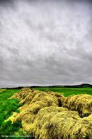 Yellow HDR by StefanAmbrus