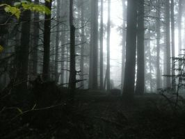 Foggy Forest by Track-Maidens
