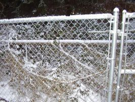 Fence Laced in Snow by iluffchinchillas