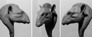 Tapir Bust by rgyoung