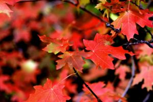 Signs of Fall: Colors by greenwalled1