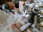 My orphan kittens Thor and Loki by Catskind