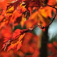 blazing autumn by MorkOrk